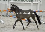 210215226 Hooghei's King (Hogenhof's Alwin x Make My Day)-002.JPG